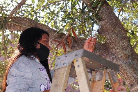 Agriculture Department Up to the Orchid Challenge